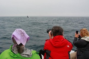 Birders and Breaching Whale