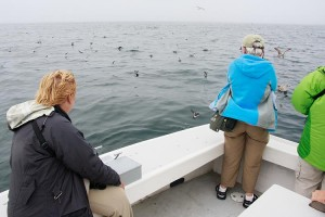 "Birding on the ""Kittiwake"""