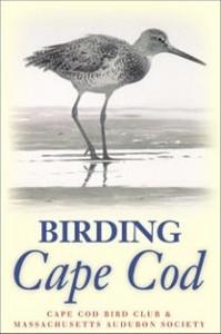 Birding Cape Cod